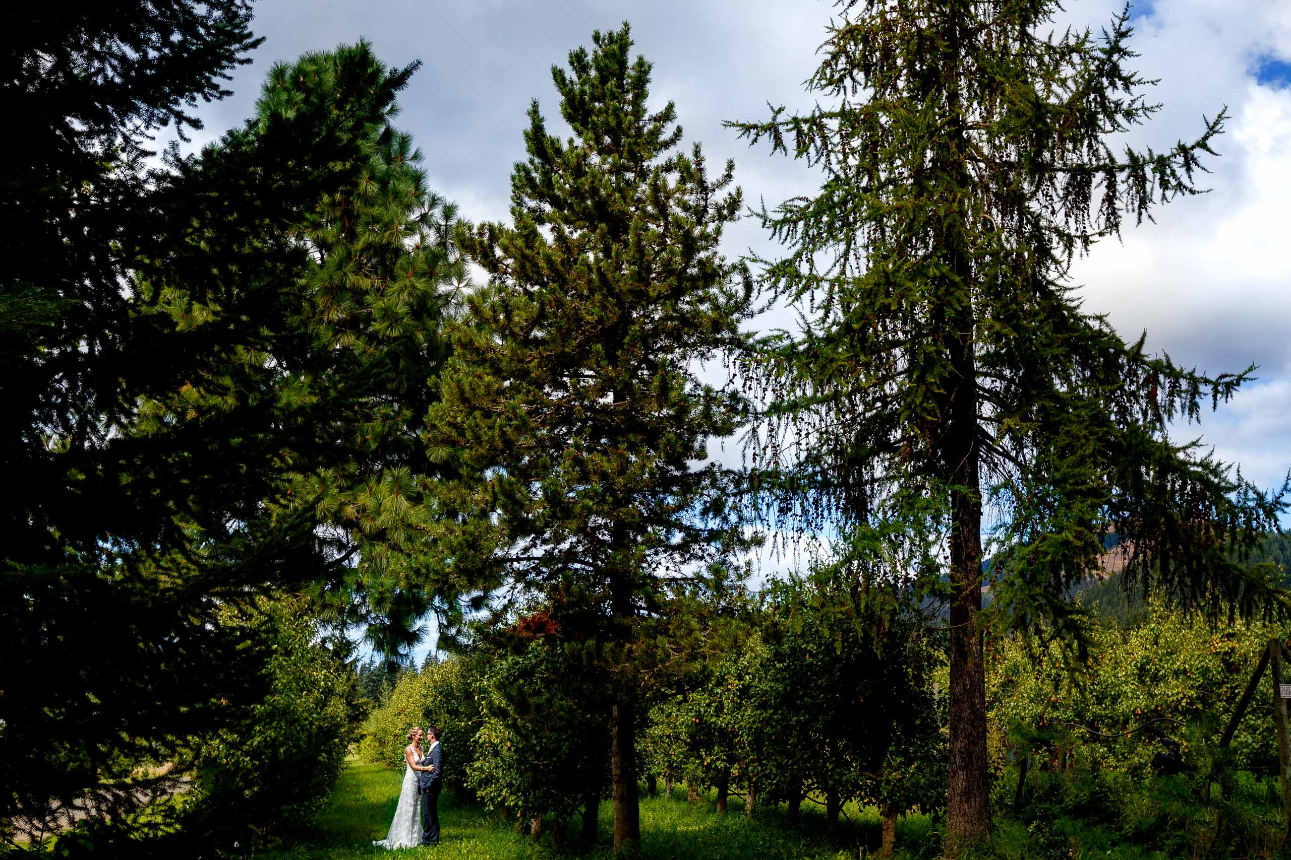 Bride and groom together in the orchard moments before their Mt Hood Organic Farms wedding near Hood River Oregon