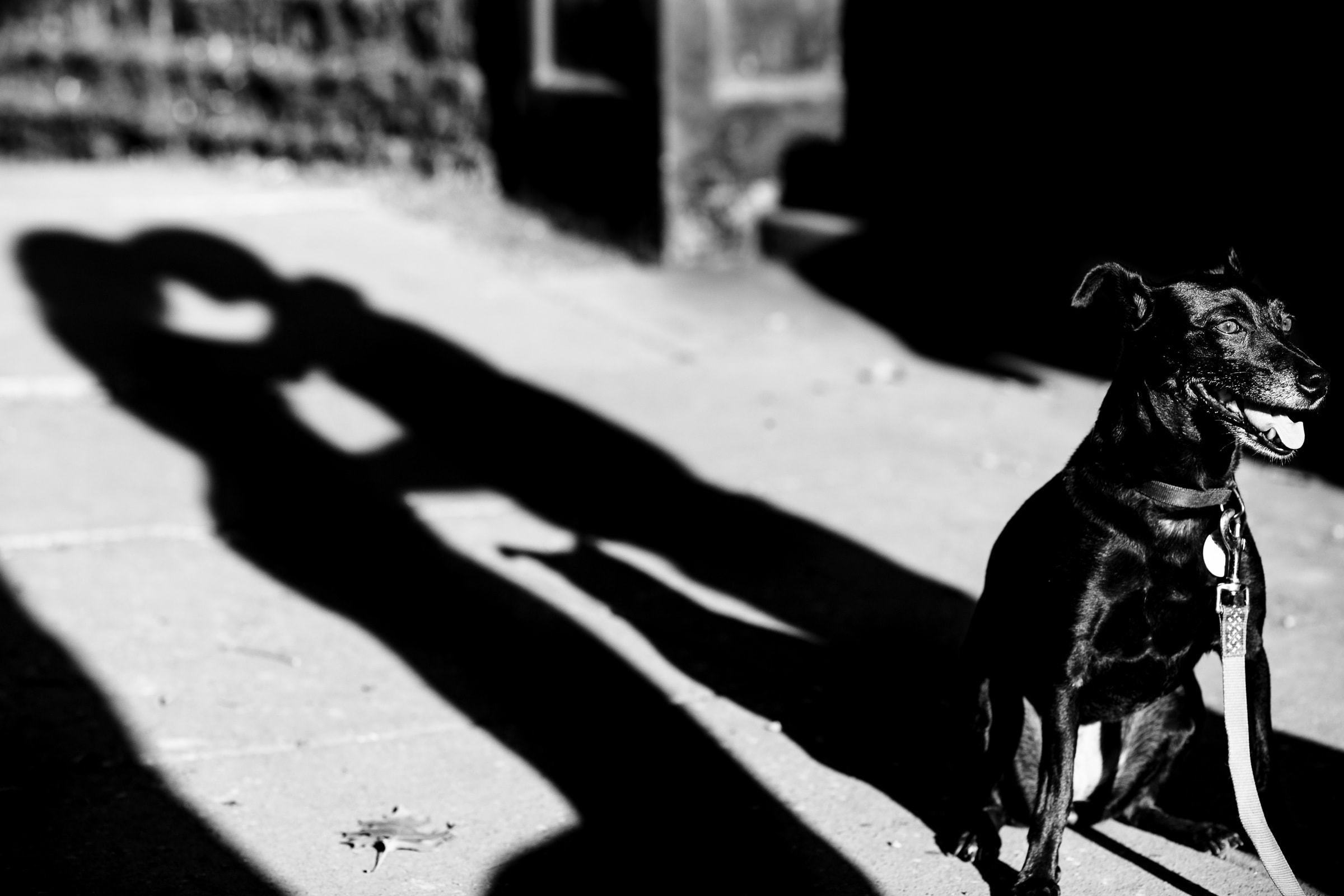 Creative Portland engagement photos of a couples shadow with their dog in hot sunlight