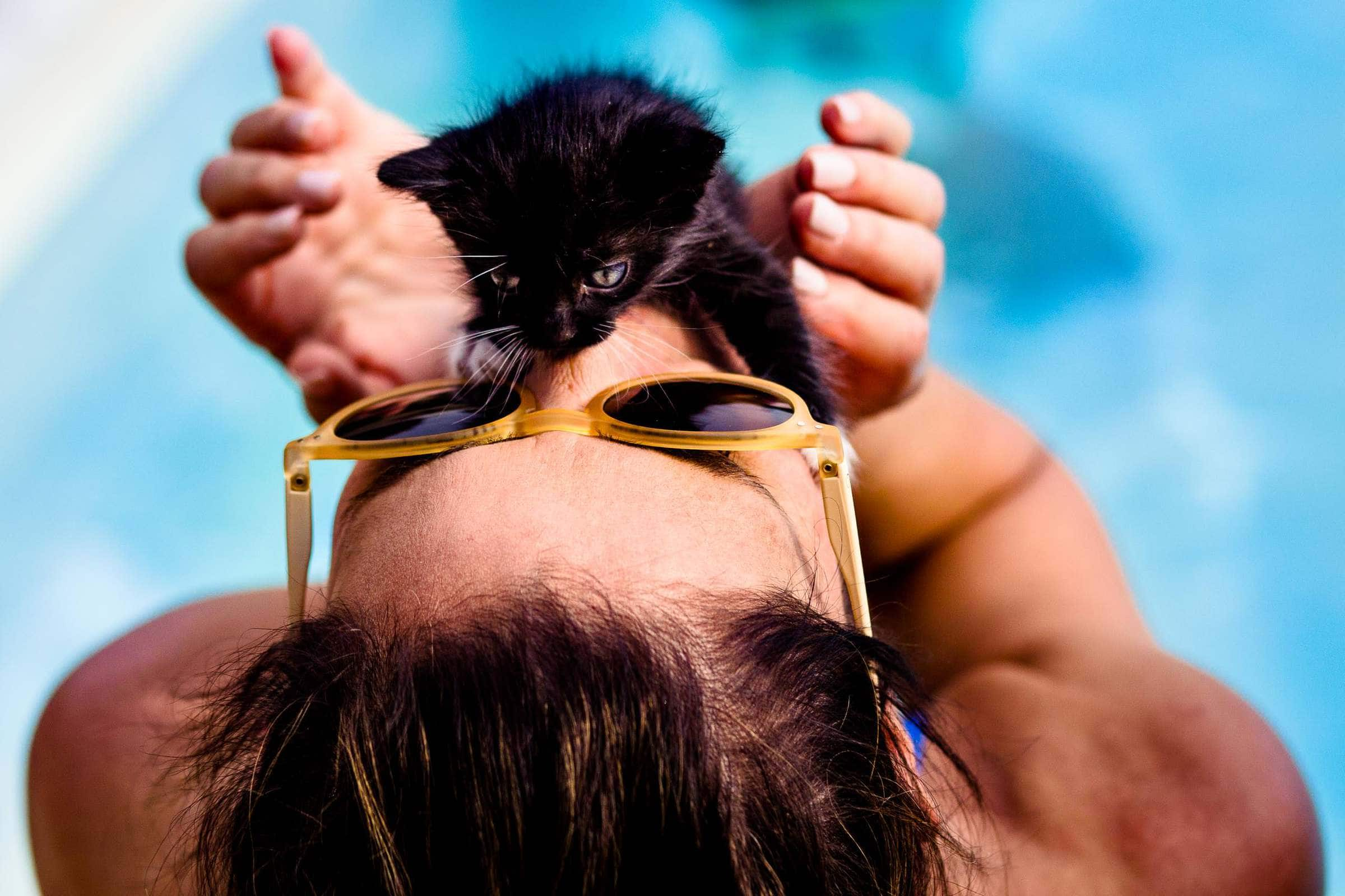 Kitten playing with woman at a pool party during a Villa Tre Grazie wedding celebration near Todi, Italy.