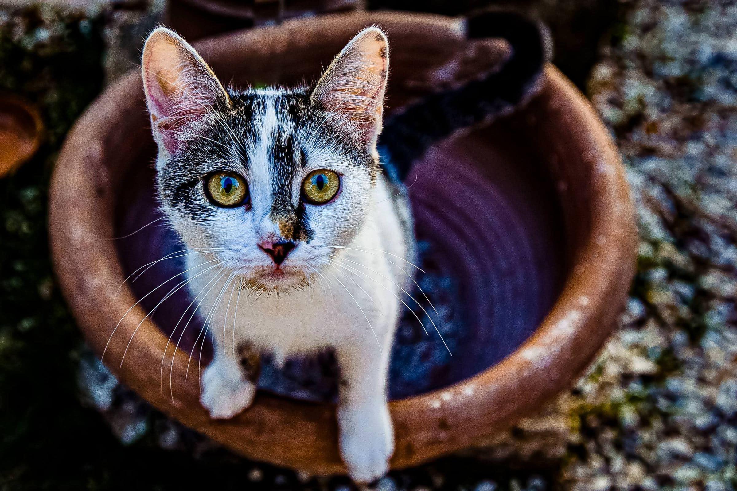 Beautiful kitten eyes at a Villa Tre Grazie wedding celebration near Todi, Italy.