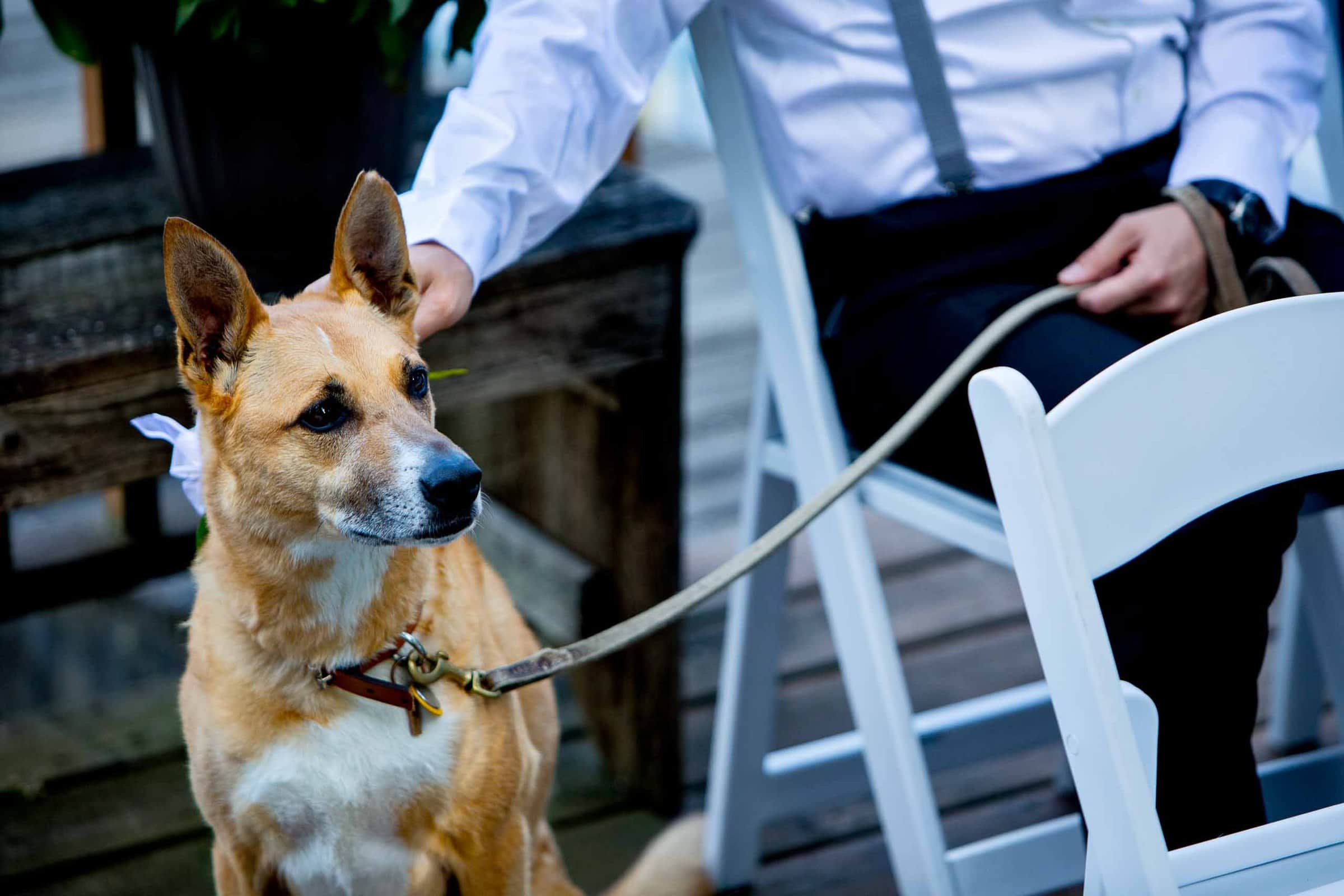 Dog of honor during a Seattle Elopement ceremony