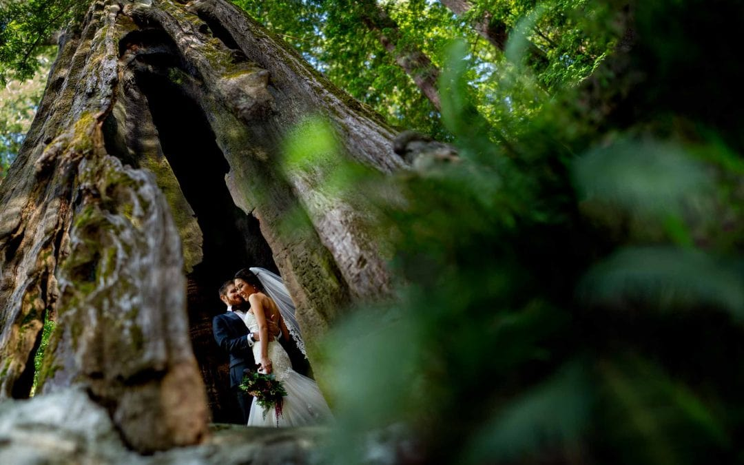Avenue of the Giants Wedding – Anya & Connor