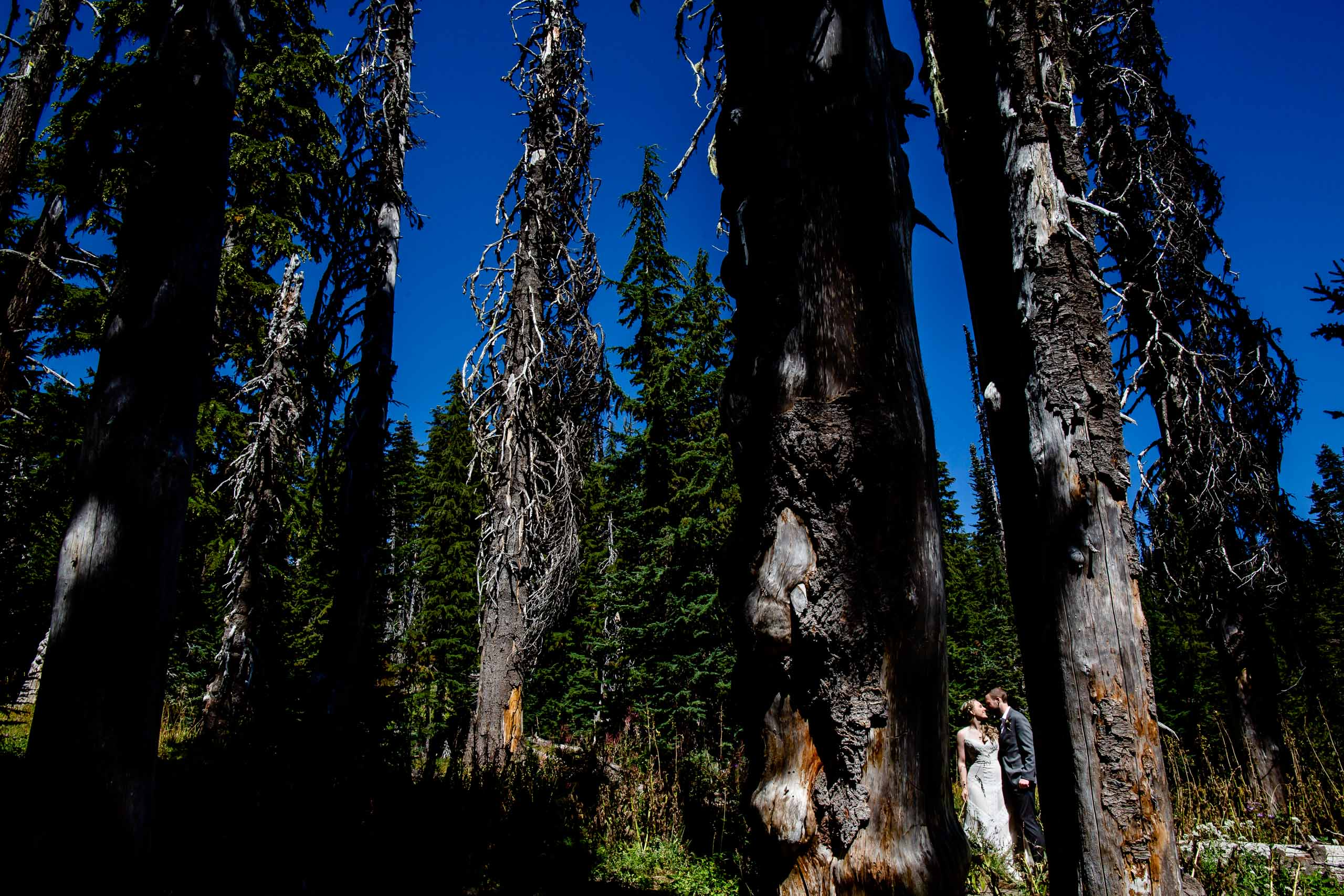 Bride and groom walking through deep nature at their Mt Hood Meadows wedding at Umbrella Falls