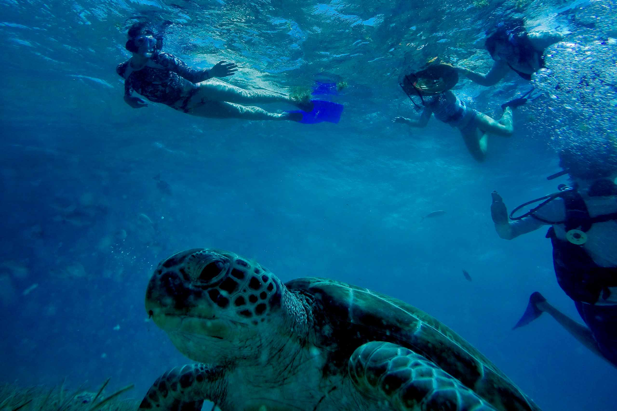Bride swimming with groom and turtles the day before their Portofino Beach Resort Wedding in Belize