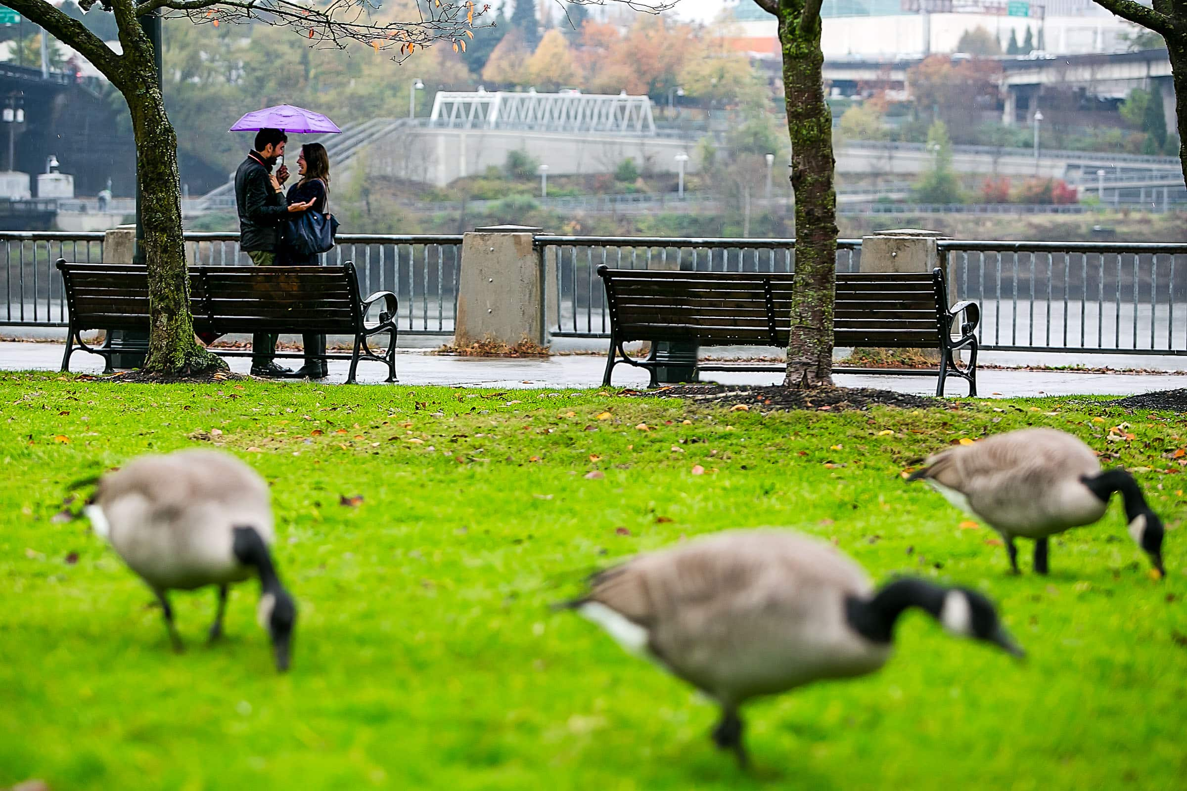 A beautiful Portland engagement proposal photo under an umbrella with geese in the foreground