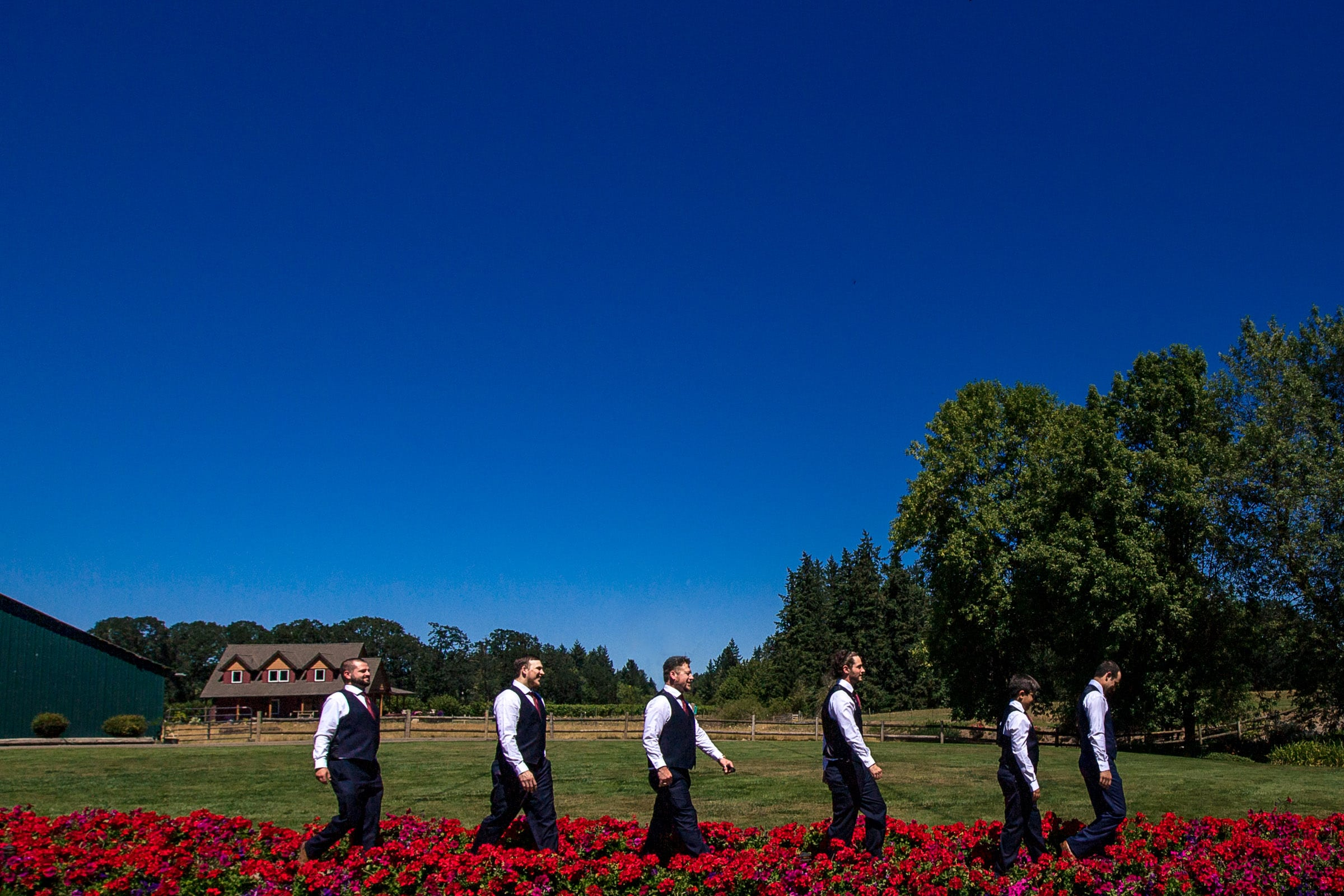 Groomsmen walking through bright red flowers at a Postlewait's Country wedding located in the heart of the Willamette Valley between Portland and Salem near Aurora, Oregon